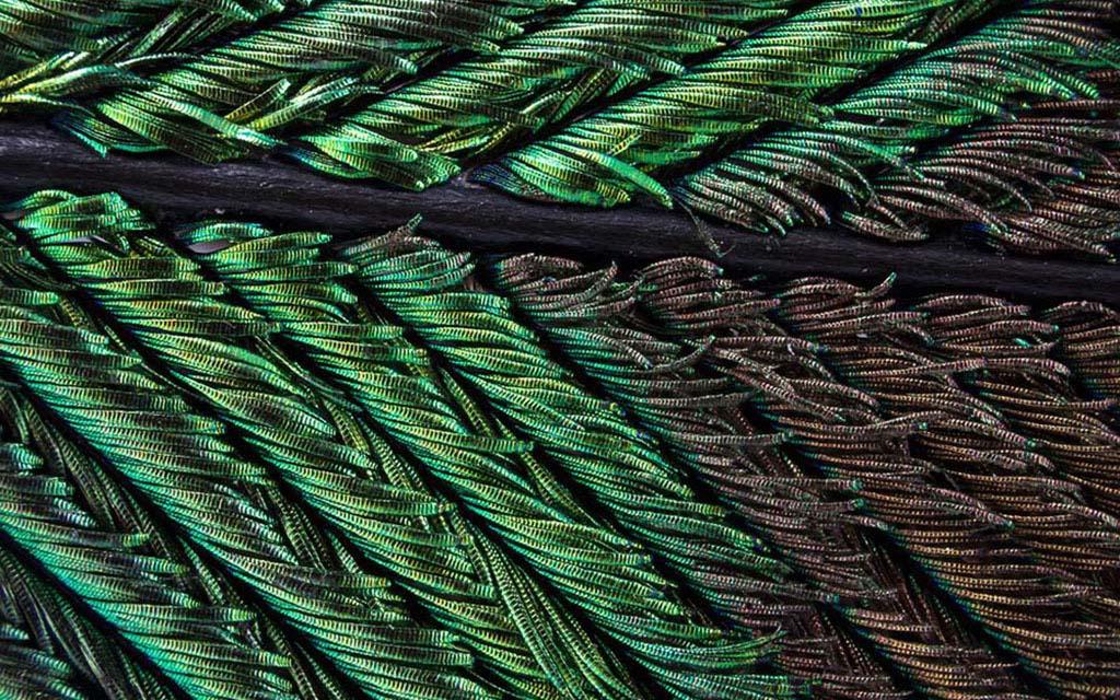 Waldo Nel, фотографии, павлиньи крылья