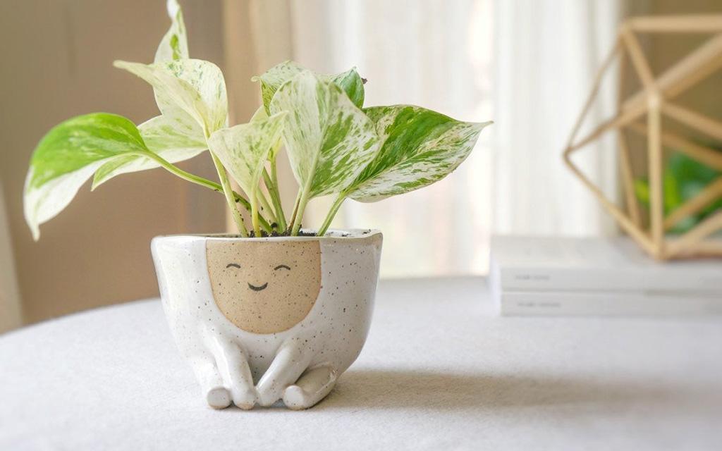 горшки, Abby Ozaltug, керамика